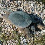 Turtle-2014-0.jpg