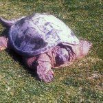 Turtle-2015-1.jpg